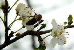 blossom by Rusu Laura