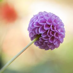 Flower photography nature photography by IonAnthosPhotography, $23.00