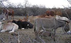 Princeton study says wildlife & cattle can be partners, not enemies, in search for food!