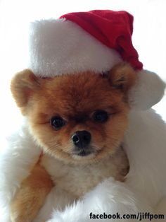<b>'Tis the season to be AWWWWWWW.</b> Exclusive pics here!