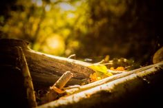 Sunlight in Wood and Autumn Leaves | #desktop #wallpapers #photography #nature #Autumn #leaves #SEASONS #sunlight #wood #beautiful