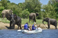 Canoe safaris are one of the best ways to explore the mighty Zambezi. River Lodge, Victoria Falls, Canoeing, Zimbabwe, Elephants, Safari, Journey, African, Marvel