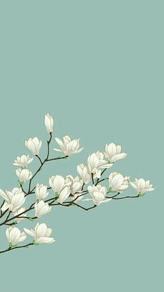 white flowers with green background. cute white flowers with green background. Flower Wallpaper, Mobile Wallpaper, Wallpaper Backgrounds, Zen Wallpaper, Cherry Blossom Wallpaper Iphone, Iphone Lockscreen Wallpaper, Paint Wallpaper, Wallpaper Designs, Wallpaper Lockscreen