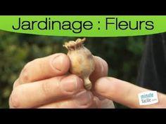 Promesse de Fleurs - YouTube Comment Planter, Seeds, Gardens, Flower Seeds, Plants, Grains