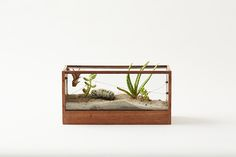 Plant-in MINI Walnut Glass Terrarium - Wire Airscape with Airplants, Succulents and Cacti