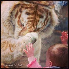 #Ternura #amor #animales