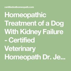 Homeopathic Treatment of a Dog With Kidney Failure - Certified Veterinary Homeopath Dr. Jeff Feinman, Holistic and Natural Treatments for Your Pet