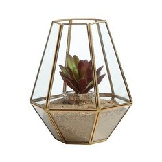 Danya B Diamond Shape Brass and Glass Terrarium, Clear ($28) ❤ liked on Polyvore featuring home, home decor, floral decor, fillers, decor, clear, succulent planter, succulent terrarium, glass planter and glass home decor