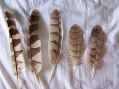 barred owl feather | Some feather ID's - Texas - BirdForum. Been finding thee by the pond