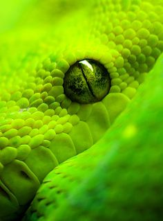 green, texture - I'm not a fan of snakes by any means, but they are uniquely beautiful...