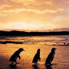 ペンギン😆  #follow #f4f #instagood #instalike #instadaily #love #happy #fun #smile #beautiful #ありがとう #おめでとう #犬 #猫 #お金 #自由 #仕事 #旅行 #時間 #感謝 #iPhone #目標 #海 #化粧 #肉 #服 #スポーツ #共有 #カフェ #リラックス