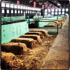 **The calm before the storm...Fort Worth Stock Show, cattle barn**