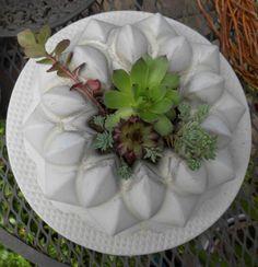 Dachwurz im Betonkuchen - kleine Guglhüpfe können auch als Kerzenständer benutzt werden - Estrich oder Estrichbeton - Formen gut einölen - siehe auch hier: http://tortentante.blogspot.de/2015/05/betonkuchen-guglhupf-aus-beton.html