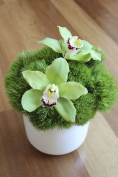 Green trick with cymbidium orchids