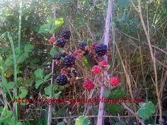 Σπιτικές, παραδοσιακές συνταγές, μαγειρικής - ζαχαροπλαστικής, της γιαγιάς. Blackberry, Plants, Blackberries, Plant, Rich Brunette, Planets