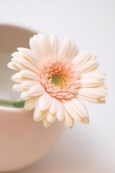 Milky and soft Flower Backgrounds, Flower Wallpaper, Amazing Flowers, Pretty Flowers, My Flower, Flower Art, Mustard Flowers, Beautiful Flowers Wallpapers, Gerber Daisies