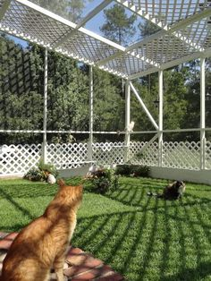 Don't want your kitty to get lost outside but still breathe fresh air and enjoy sunlight? A cat enclosure is the best solution! Catios also help to keep . Hotel Gato, Diy Pour Chien, Cat Habitat, Outdoor Cat Enclosure, Reptile Enclosure, Diy Cat Enclosure, Pet Enclosures, Cat Fence, Cat Cages