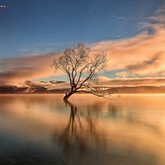 Photo The Lone Tree by Bobby Barrameda on 500px