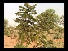 Plantas Medicinais - Documentário