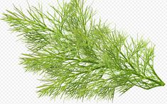 How to use fennel waste