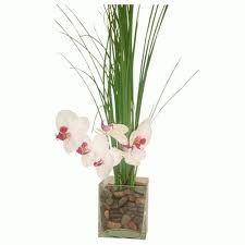 Resultados da Pesquisa de imagens do Google para http://plantas-ornamentais.com/wp-content/uploads/2011/01/51.jpg