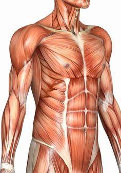 Три ключевые точки тела