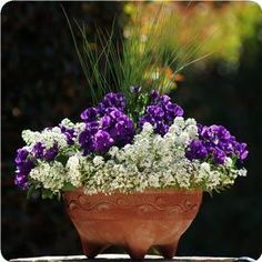 The vivid color of the Pansies in this container is the focal point that really complements the other plants. But you don't have to be limited to purple - Pansies come in so many bright colors, you can have your pick! Once the weather starts to heat up, you may notice the Pansies and Alyssum beginning to wilt, so you can plan to re-plant more Pansies in Autumn.