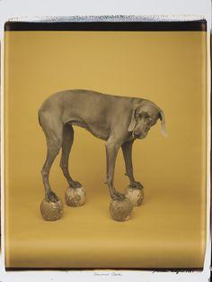 William Wegman, Untitled, 1987  #yellow, #photography