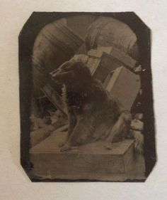 6th Plate Tintype Photo Dog Warehouse Docks Barrels Antique 1860s-70s