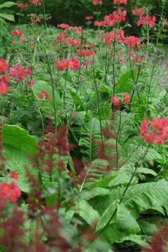 Doddington Place Gardens - » A Romantic Scottish Island Garden - Faversham, Sittingbourne, Kent