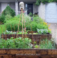 Edible Front Gardens and How I came out as a front yard veggie grower - empressofdirt.net