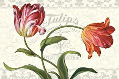 Tulipa Botanica I Cream Prints by Lisa Audit at AllPosters.com