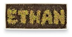 Grow your own name; Grass Letters