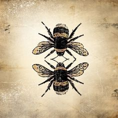 vintage bee drawing - Google Search