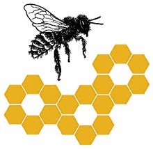Honey Bee Nutrition