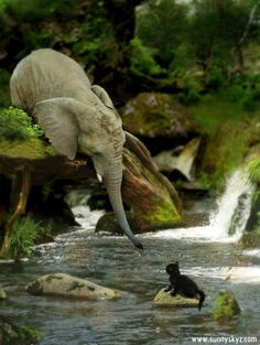"""An elephant reaches its trunk to save a kitten."""