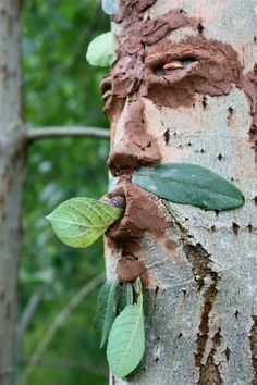 Use Mud to make faces on trees - Create memorable outdoor experiences