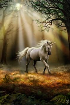 Poster ANNE STOKES - Unicorn