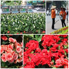 The flowers are a beaut in full bloom around the city's central park which are being well-maintained by the Vietnamese manangs.