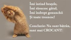 Nu Sunt Batran Dar Sunt Mai Crocant Cute Baby Animals, Animals And Pets, Jokes And Riddles, Lol So True, Just For Laughs, Cute Babies, Haha, Funny Memes, Inspirational Quotes