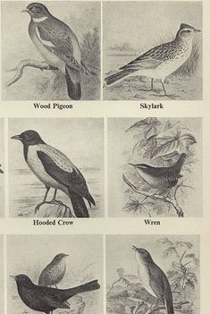 Antique lithograph Print BIRD CHART by VintageInclination on Etsy