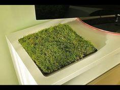 Jak ożywić mieszkanie kawałkiem mchu - YouTube