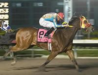 Blues Girl Too(2004)Corona Cartel- Run The Dash By Sixarun. 3x4 To Dash For Cash, 3x5 To Rose Bug, 4x5 To Easy Jet & Chicks Deck.  13 Starts 8 Wins. $2,032,328. Won Los Alamitos Two Million Futurity (G1), Champion Of Champions S(G1), Golden State Derby(G1), Vessels Memorial H(G1), 2nd Golden State Million Futurity (G1), Ed Burke Million Futurity (G1).