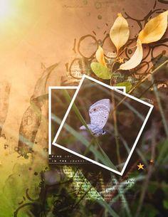 Site Design, Trust Yourself, View Photos, Digital Scrapbooking, Photo Art, Gallery, Artwork, Flowers, Work Of Art