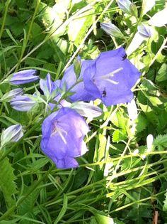 Kesän kukkaset