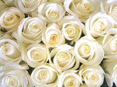 Love white roses Rebecca #beautiful #flowers #roses #whiteflowers