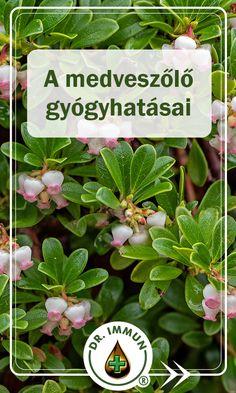 Herb Garden, Spices, Herbs, Health, Plants, Spice, Health Care, Herbs Garden, Herb