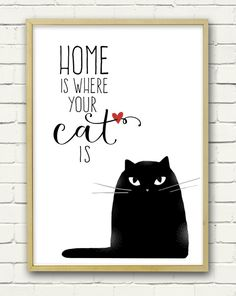 Home is where your cat is