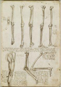Leonardo Da Vinci anatomical sketches/drawings ca. Leg Anatomy, Anatomy Study, Anatomy Art, Anatomy Reference, Human Anatomy, Michelangelo, Bone Drawing, Figure Drawing, Anatomy Sketches