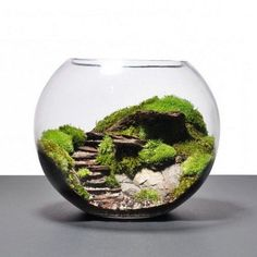 Over 40 suggestions on how to make a terrarium yourself b - Miniature Garden Ideas Decor Terrarium, Build A Terrarium, Terrarium Plants, Succulent Terrarium, Terrarium Wedding, Water Terrarium, Ideas Florero, Amazing Gardens, Beautiful Gardens